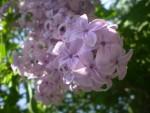 Цветочки-лепесточки4