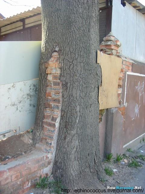 Забор в дереве